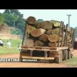 Genetically Engineered Trees – The Increasing Threat / Documentary Video