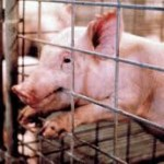"Exposing the Brutality of Industrial Meat Production a ""Crime,"" thanks to ALEC model bill"