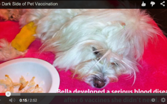 The Dark Side of Pet Vaccination